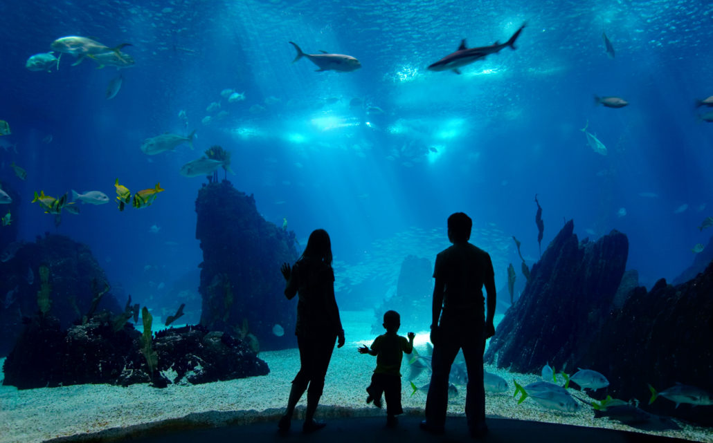 at the aquarium for a child interested in marine biology to increase his self-worth